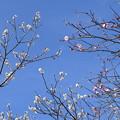 Photos: 白とピンクと