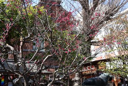 菅原院天満宮の紅梅