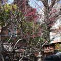 Photos: 菅原院天満宮の紅梅