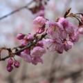 Photos: 唐橋(カラバシ)