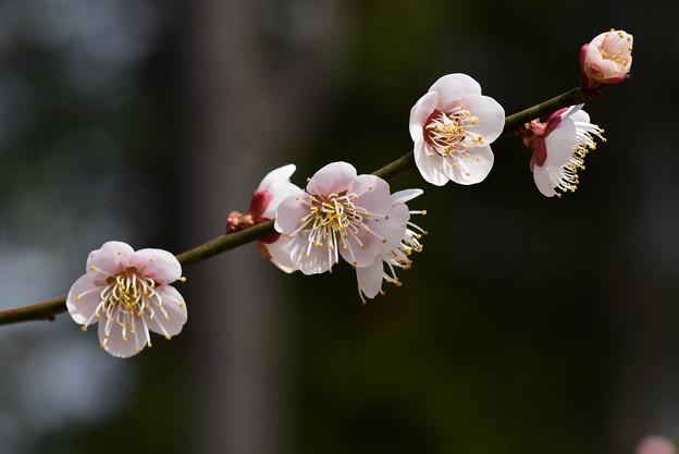 Photos: 鶯宿(オウシュク)