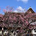 Photos: 本殿前の飛び梅