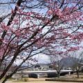 Photos: 鴨川公園のオカメ
