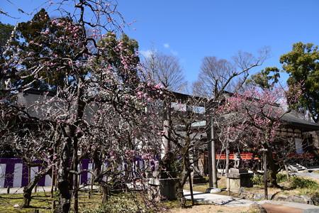 紅梅殿と枝垂れ梅