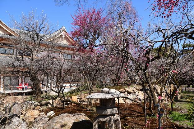 文道会館と梅