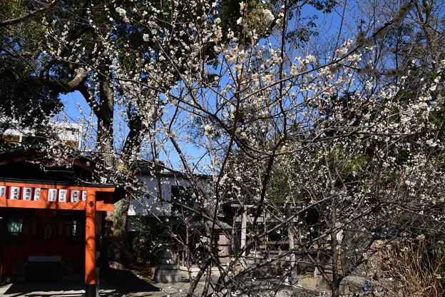 平野神社の白梅