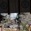 桃桜咲く平野神社
