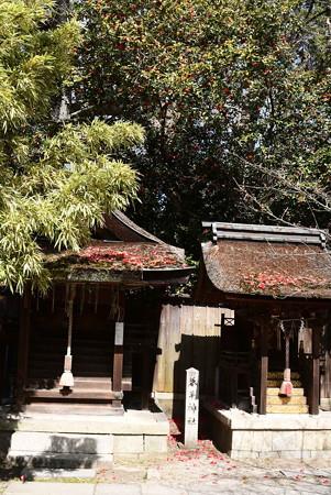 椿咲く宗像神社