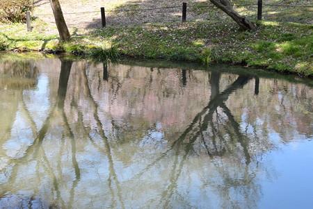 池に映る梅林