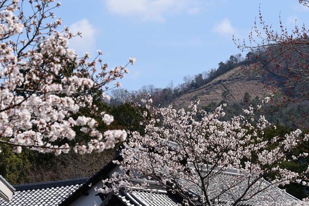 桜の上に浮かぶ大文字