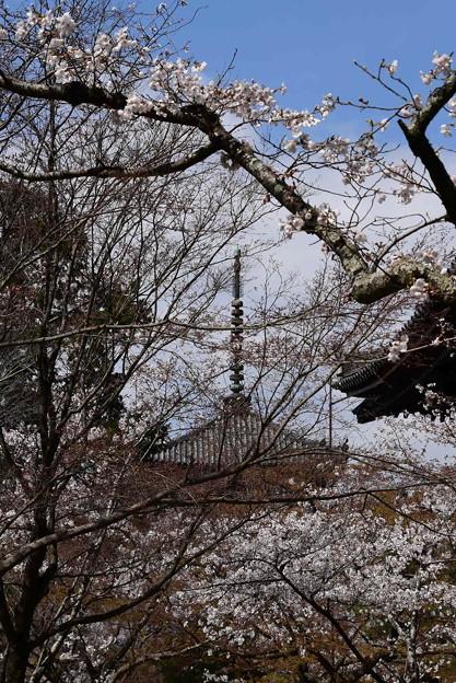桜の中の塔