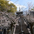 染井吉野の上の文殊塔