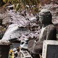 お釈迦様を彩る桜