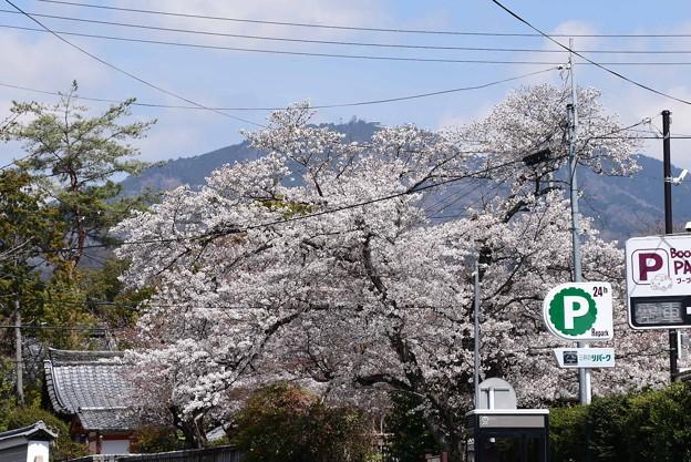 桜の上の比叡山