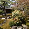 光琳曲水の庭