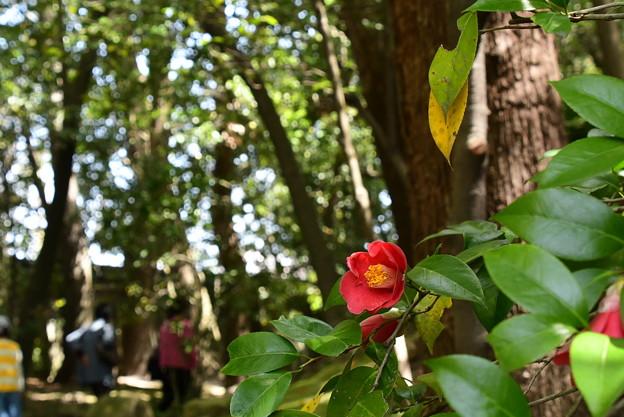 椿咲く神苑