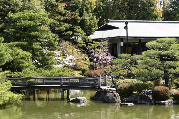 結婚式場脇の桜
