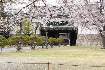 二条城の桜風景