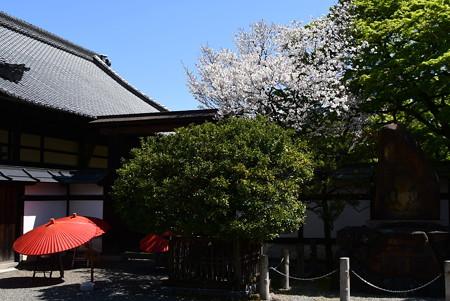 桜咲く宝鏡寺