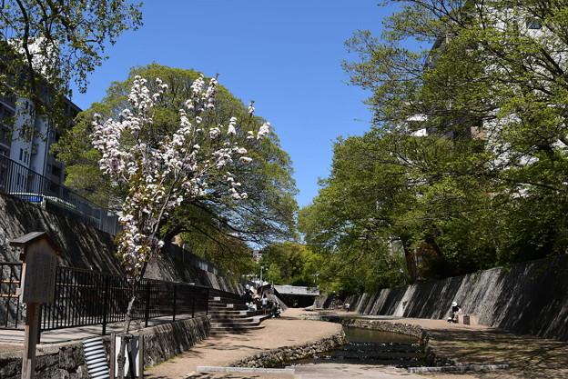 堀川第一橋の天の川(アマノガワ)