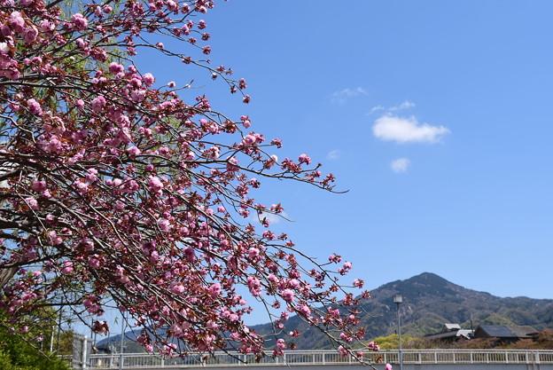 関山と比叡山