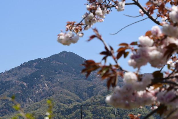 普賢象の奥の比叡山