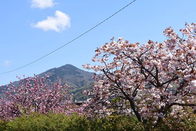 普賢象、関山と比叡山