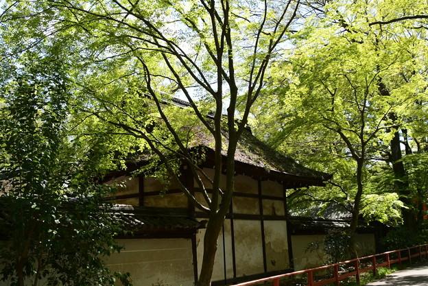 新緑の河合神社