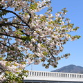比叡山と一葉(イチヨウ)