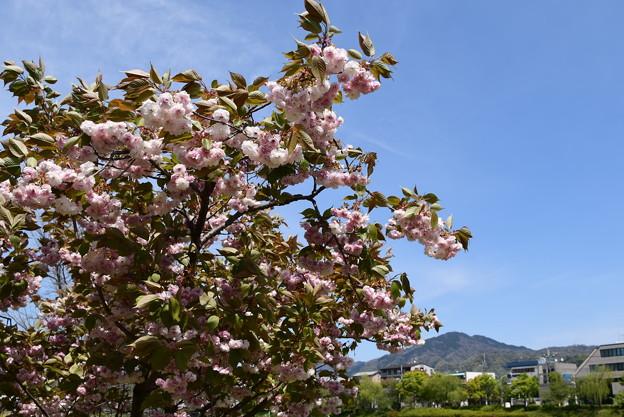 普賢象と比叡山