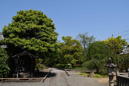 緑の上品蓮台寺