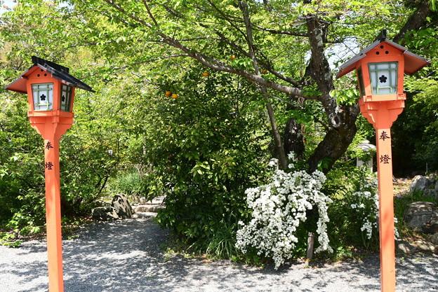 小手毬咲く平野神社
