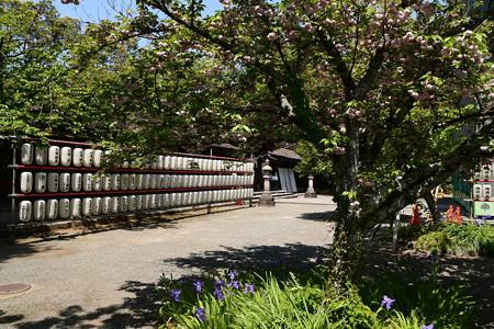 突羽根と鳶尾の平野神社