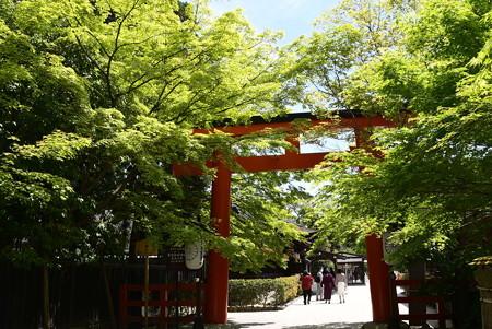 新緑の下鴨神社