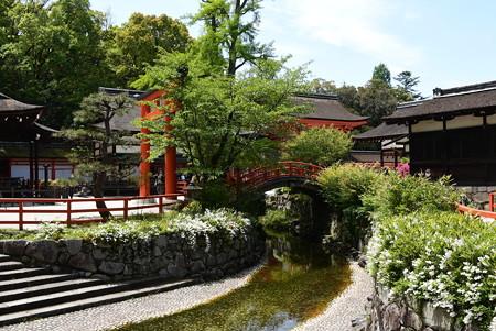 空木咲く下鴨神社