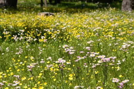 春紫苑と馬の足形の原
