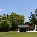 Photos: 神馬社を包む新緑