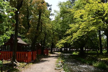 新緑の楢の小川