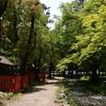 Photos: 新緑の楢の小川
