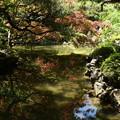 Photos: 春もみじを映す蒼龍池