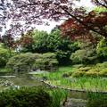 Photos: 春もみじの白虎池