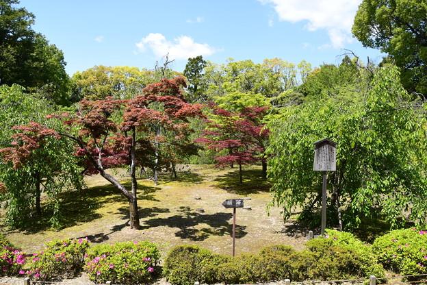 新緑と春もみじの神苑