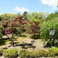 Photos: 新緑と春もみじの神苑