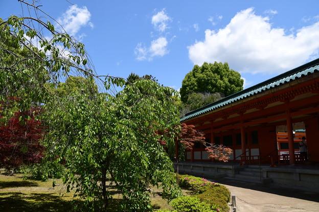 新緑の平安神宮