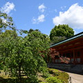 Photos: 新緑の平安神宮