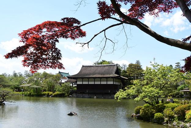 Photos: 春もみじと尚美館