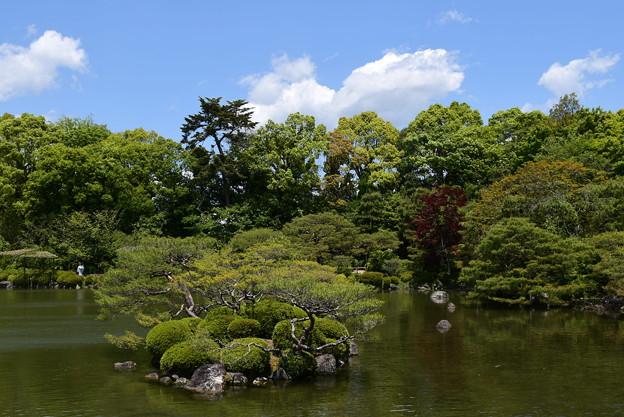 緑の栖鳳池