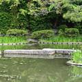 Photos: 臥龍橋と杜若