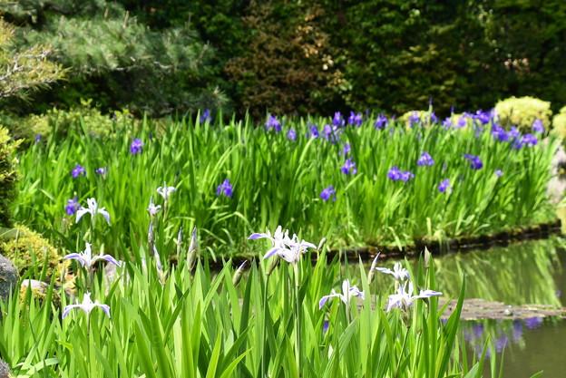 折り鶴咲く蒼龍池