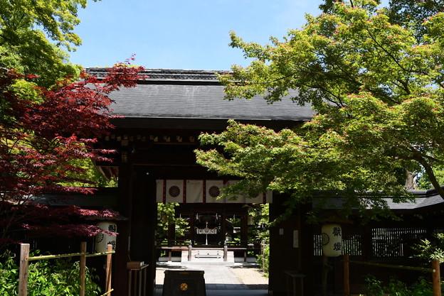 新緑の梨木神社